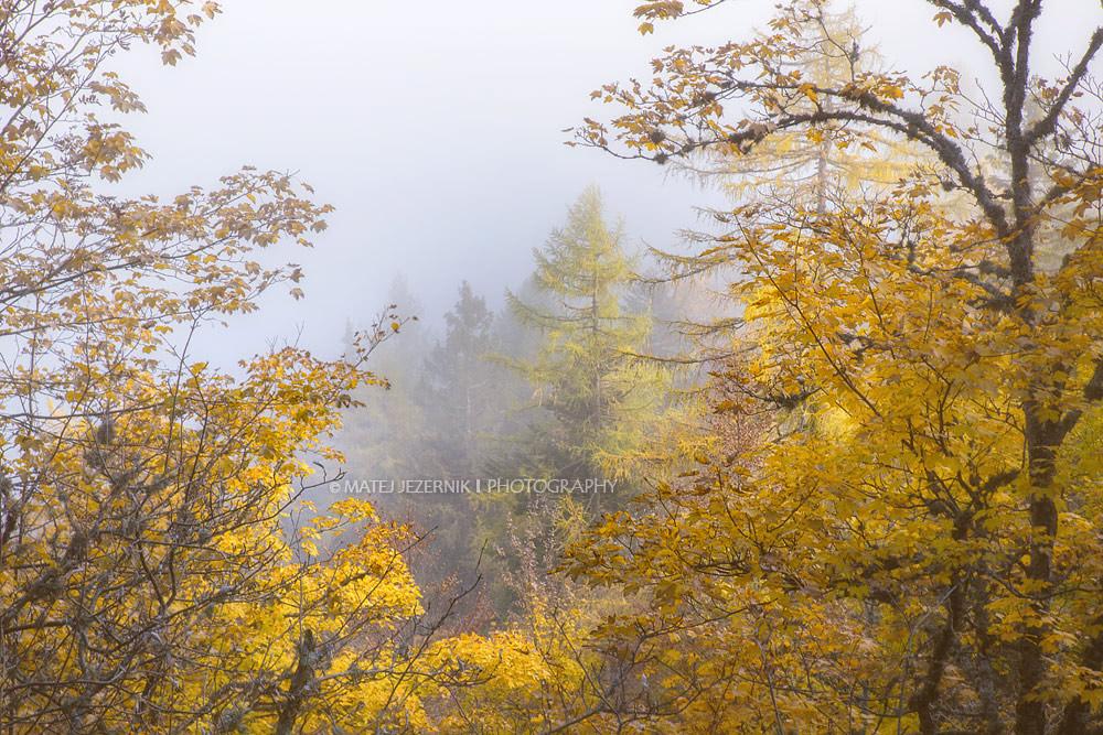 Autumn_forest.jpg